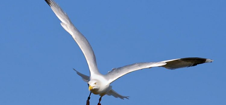 The ripple: are you a seagull manager?